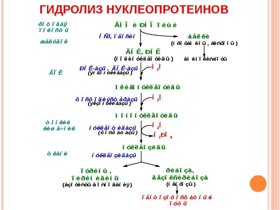 ГИДРОЛИЗ НУКЛЕОПРОТЕИНОВ