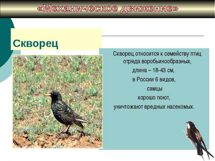 Скворец Cкворец относится к семейству птиц отряда воробьинообразных, длина – ...