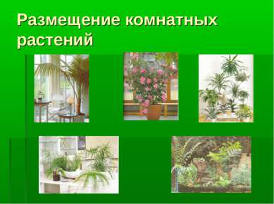 Размещение комнатных растений