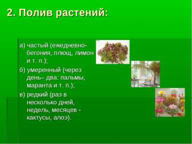 2. Полив растений: а) частый (ежедневно- бегония, плющ, лимон и т. п.); б) ум...