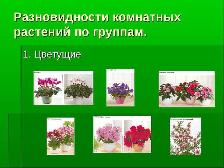 Разновидности комнатных растений по группам. 1. Цветущие