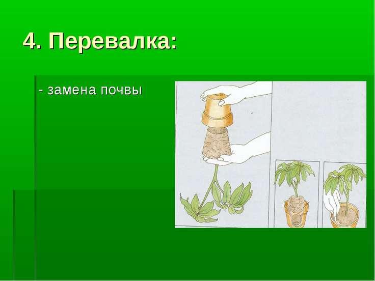 4. Перевалка: - замена почвы