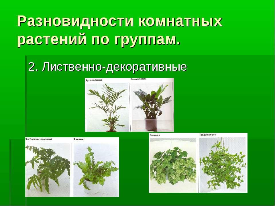 Разновидности комнатных растений по группам. 2. Лиственно-декоративные