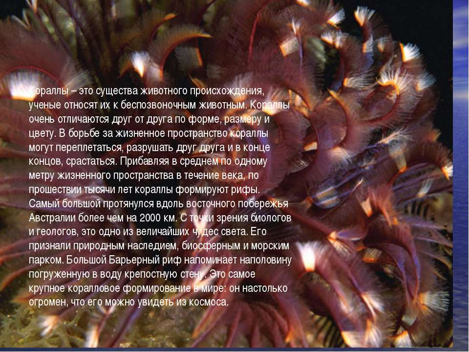 Кораллы – это существа животного происхождения, ученые относят их к беспозвон...