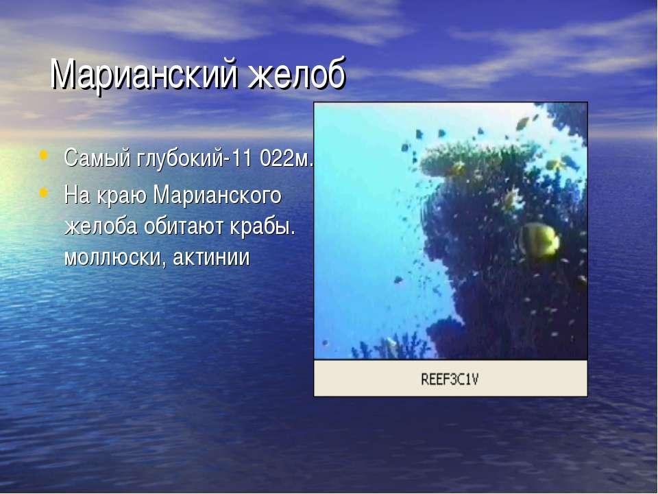 Марианский желоб Самый глубокий-11 022м. На краю Марианского желоба обитают к...