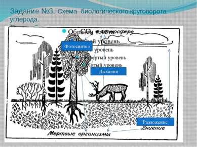 Задание №3. Схема биологического круговорота углерода. Схема биологического к...