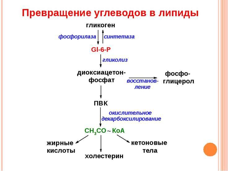 Превращение углеводов в липиды