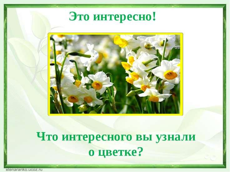 Это интересно! Что интересного вы узнали о цветке?