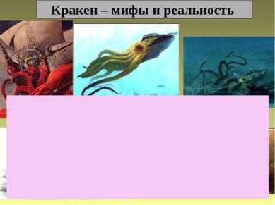 Кракен – мифы и реальность