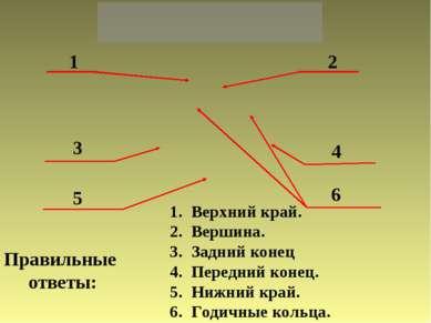 1 2 3 4 5 6 Правильные ответы: Верхний край. Вершина. Задний конец Передний к...