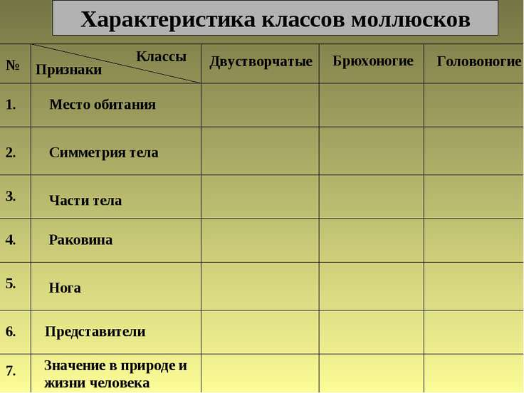 Характеристика классов моллюсков № Классы Признаки Двустворчатые Брюхоногие Г...
