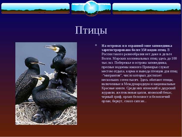 Птицы На островах и в охранной зоне заповедника зарегистрировано более 350 ви...