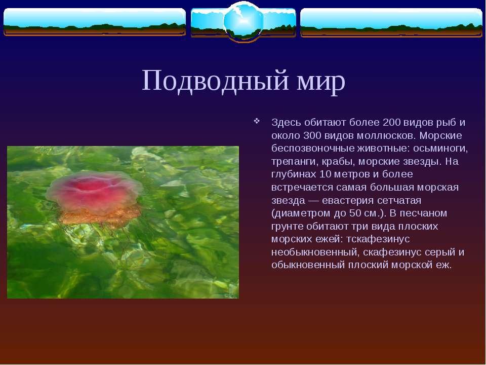 Подводный мир Здесь обитают более 200 видов рыб и около 300 видов моллюсков. ...