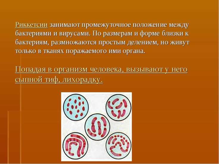 Риккетсии занимают промежуточное положение между бактериями и вирусами. По ра...