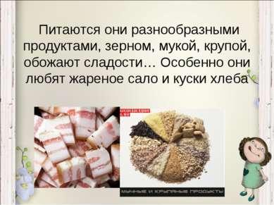 Питаются они разнообразными продуктами, зерном, мукой, крупой, обожают сладос...