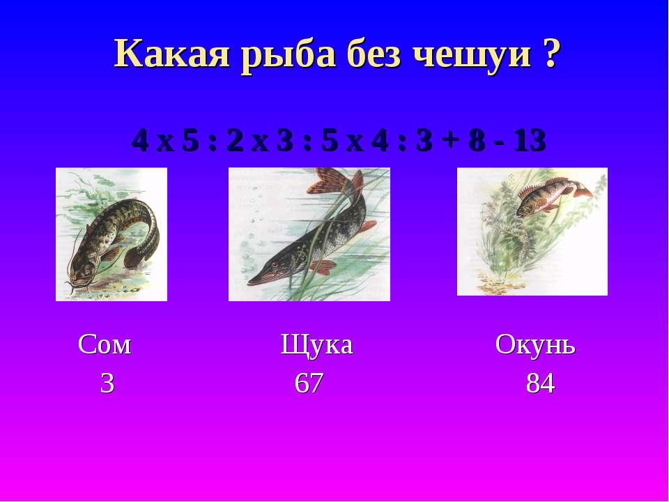 Какая рыба без чешуи ? 4 х 5 : 2 х 3 : 5 х 4 : 3 + 8 - 13 Сом Щука Окунь 3 67 84