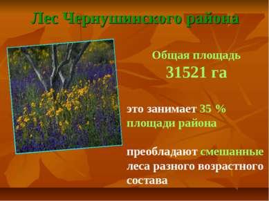 Лес Чернушинского района Общая площадь 31521 га это занимает 35 % площади рай...