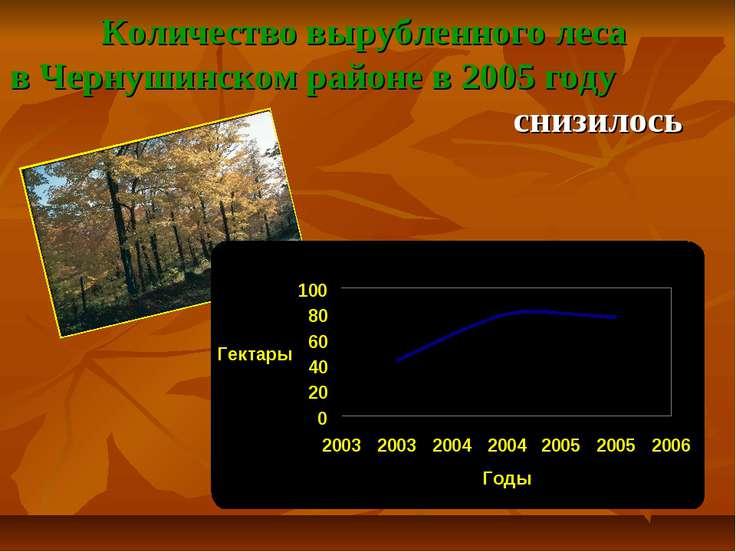 Количество вырубленного леса в Чернушинском районе в 2005 году снизилось