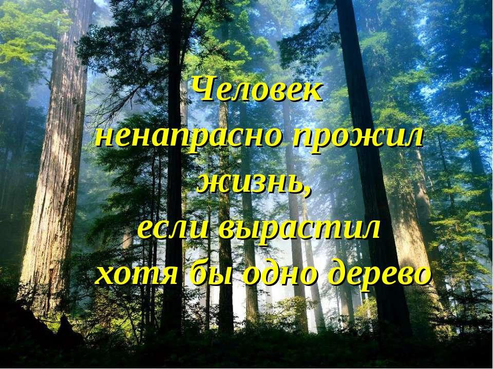 Человек ненапрасно прожил жизнь, если вырастил хотя бы одно дерево