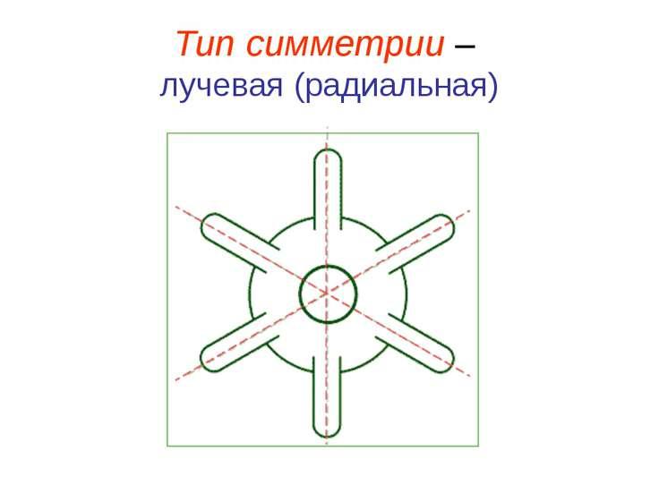 Тип симметрии – лучевая (радиальная)