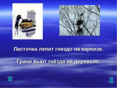 Ласточка лепит гнездо на карнизе. Грачи вьют гнёзда на деревьях.