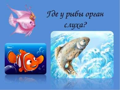 Где у рыбы орган слуха?