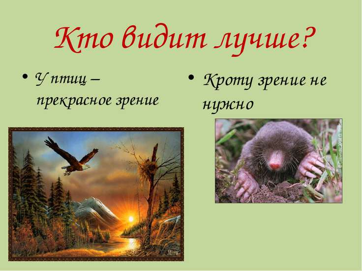 Кто видит лучше? У птиц – прекрасное зрение Кроту зрение не нужно