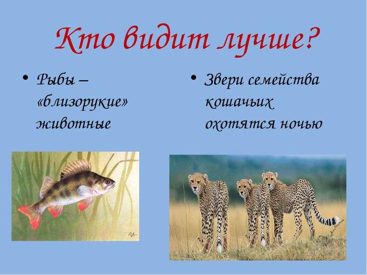 Кто видит лучше? Рыбы – «близорукие» животные Звери семейства кошачьих охотят...