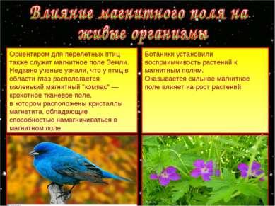 Ориентиром для перелетных птиц также служит магнитное поле Земли. Недавно уче...