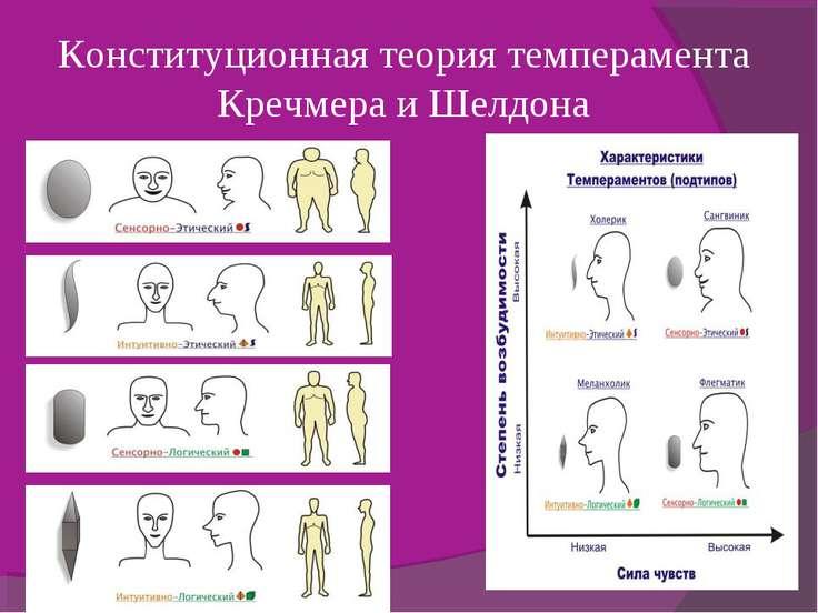 Конституционная теория темперамента Кречмера и Шелдона