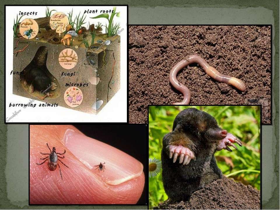 Почва— это среда обитания множества организмов. Существа, обитающие в почве,...