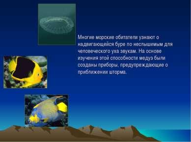 Многие морские обитатели узнают о надвигающейся буре по неслышимым для челове...