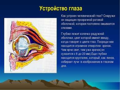 Устройство глаза Как устроен человеческий глаз? Снаружи он защищен прозрачной...