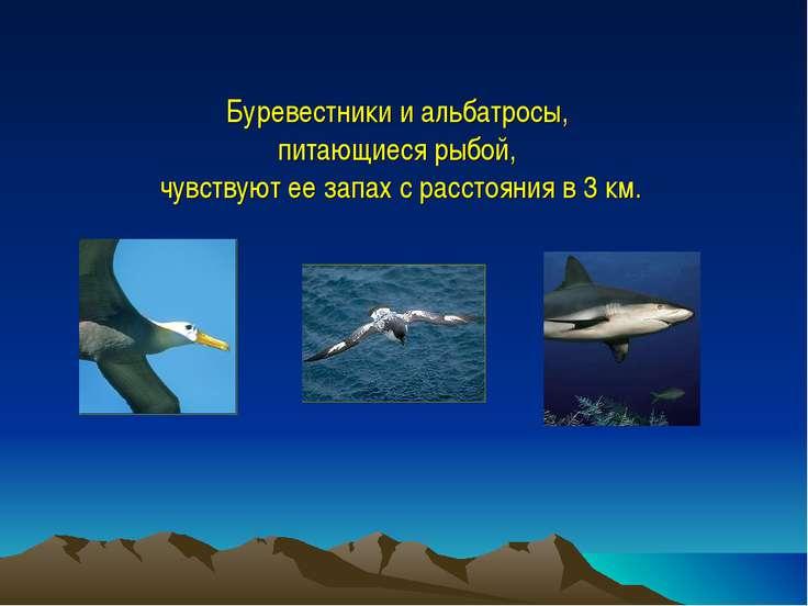 Буревестники и альбатросы, питающиеся рыбой, чувствуют ее запах с расстояния ...