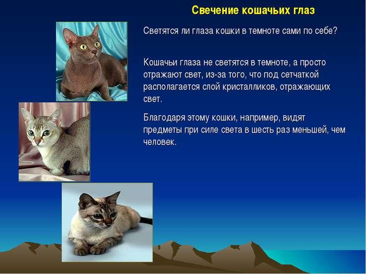 Свечение кошачьих глаз Светятся ли глаза кошки в темноте сами по себе? Кошачь...