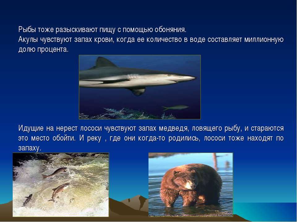 Рыбы тоже разыскивают пищу с помощью обоняния. Акулы чувствуют запах крови, к...