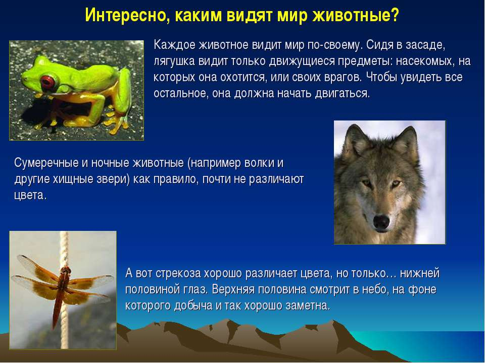 Интересно, каким видят мир животные? Каждое животное видит мир по-своему. Сид...