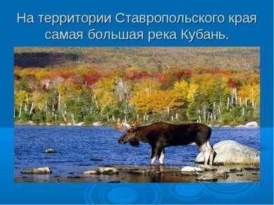 На территории Ставропольского края самая большая река Кубань.