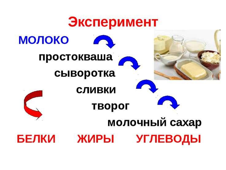 Эксперимент МОЛОКО простокваша сыворотка сливки творог молочный сахар БЕЛКИ Ж...
