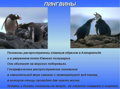 ПИНГВИНЫ Пингвины распространены главным образом в Антарктиде и в умеренном п...