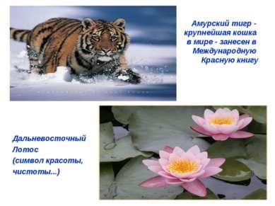 Амурский тигр - крупнейшая кошка в мире - занесен в Международную Красную кни...