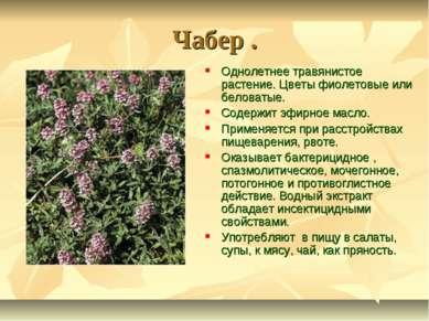 Чабер . Однолетнее травянистое растение. Цветы фиолетовые или беловатые. Соде...