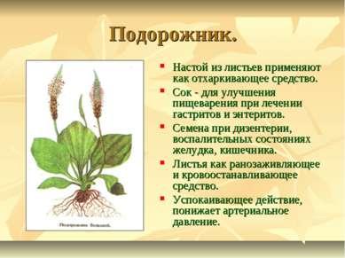 Подорожник. Настой из листьев применяют как отхаркивающее средство. Сок - для...