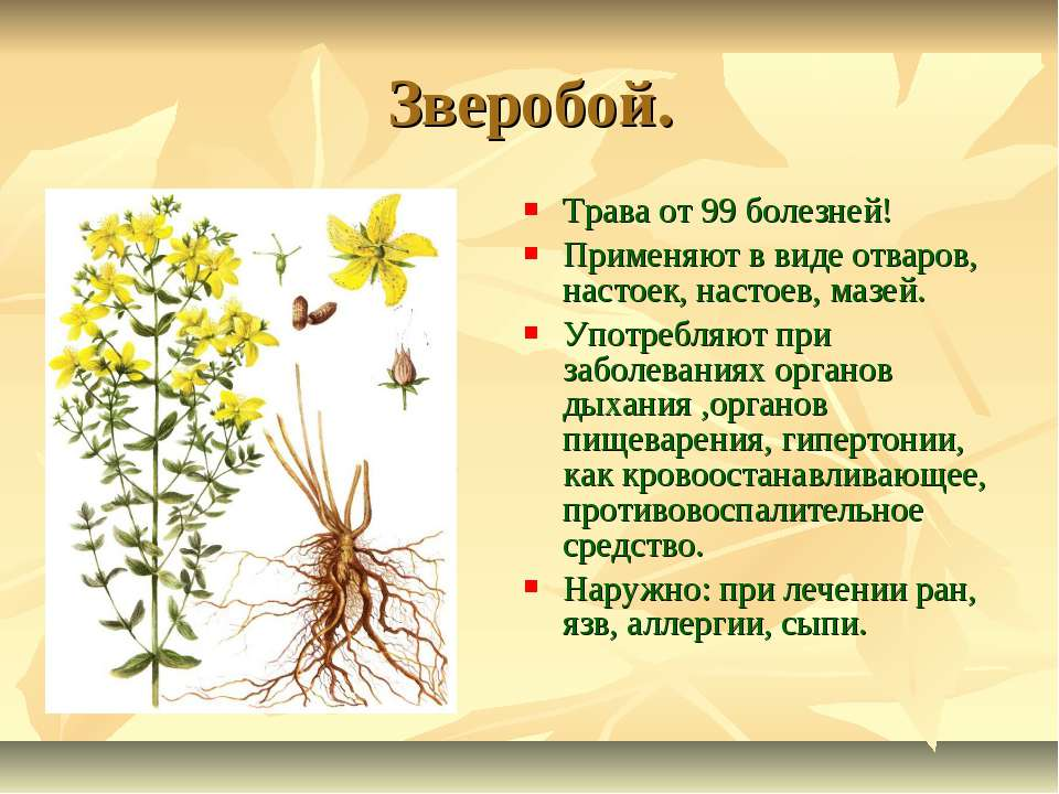 Использование природных лекарственных средств - презентация к уроку Окружающий мир