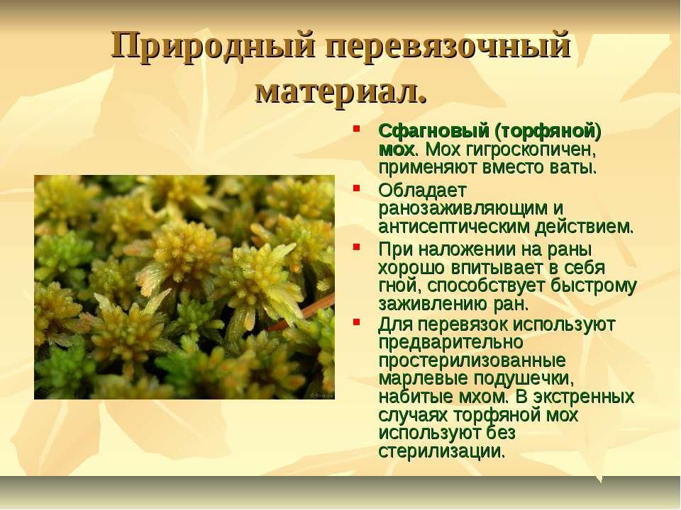 Природный перевязочный материал. Сфагновый (торфяной) мох. Мох гигроскопичен,...