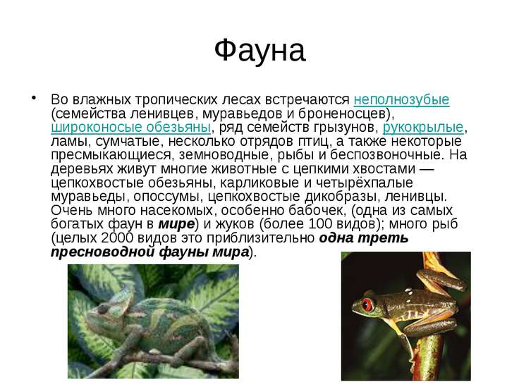 Фауна Во влажных тропических лесах встречаются неполнозубые (семейства ленивц...