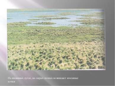 На низинных лугах, на сырых почвах возникают земляные кочки