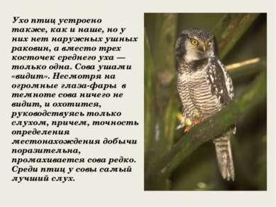 Ухо птиц устроено также, как и наше, но у них нет наружных ушных раковин, а в...