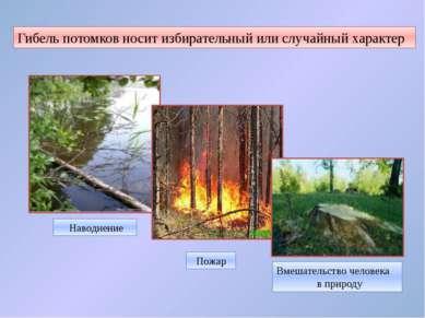 Гибель потомков носит избирательный или случайный характер Наводнение Пожар В...