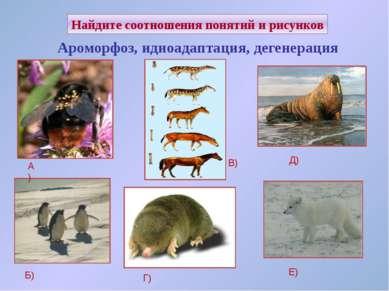 Найдите соотношения понятий и рисунков Ароморфоз, идиоадаптация, дегенерация ...